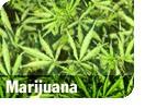 pic_marijuana